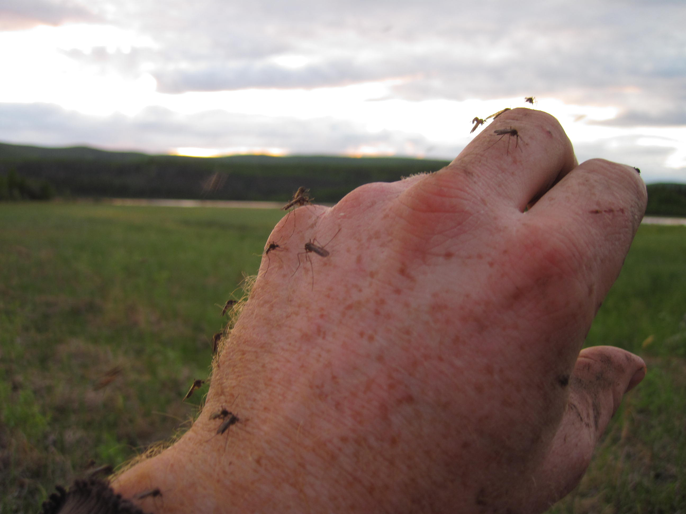 Dances With Mosquitoes The Practical Primitivist